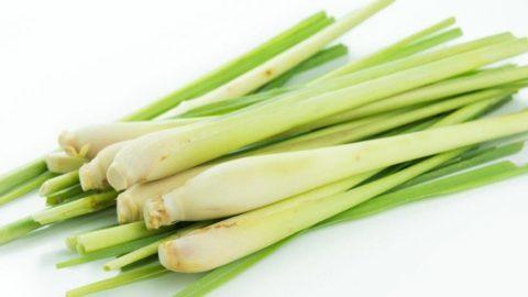 BÍ MẬT tạo nên sự khác biệt của Dầu gội 11 loại thảo dược Momcare