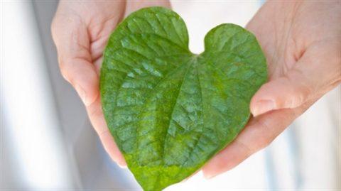 Bóc trần sự thật nước thuốc rửa phụ khoa trị ngứa, nấm và mụn tốt nhất